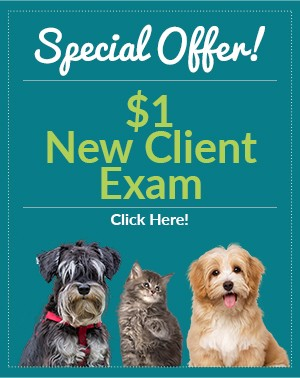 Special Offer - $1 New Client Exams. Click Here!